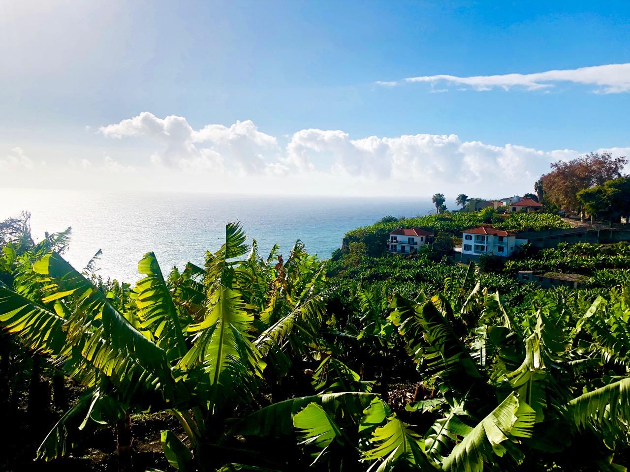 Madeira Funchal Virve Fredman